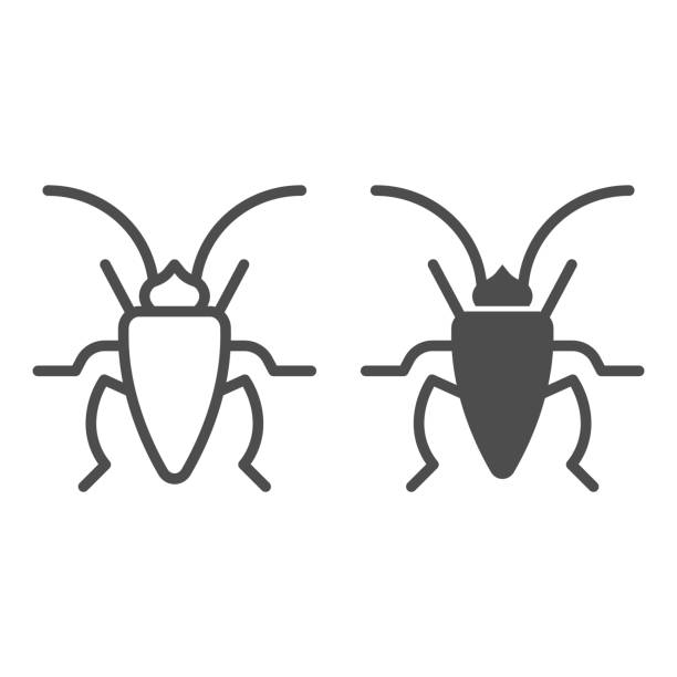 Cockroach line and solid icon, Insects concept, roach sign on white background, Cockroach silhouette icon in outline style for mobile concept and web design. Vector graphics. Cockroach line and solid icon, Insects concept, roach sign on white background, Cockroach silhouette icon in outline style for mobile concept and web design. Vector graphics macrophotography stock illustrations