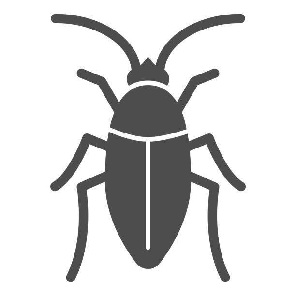 Cockroach solid icon, pests concept, beetle sign on white background, roach icon in glyph style for mobile concept and web design. Vector graphics. Cockroach solid icon, pests concept, beetle sign on white background, roach icon in glyph style for mobile concept and web design. Vector graphics macrophotography stock illustrations