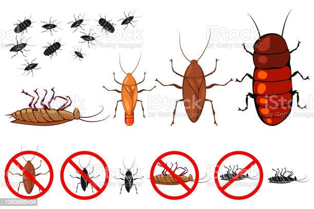 Cockroach species vector icons set signs for the control of insects vector id1063698434?b=1&k=6&m=1063698434&s=612x612&h=luqbqsglt9mat kc03tbpqlc2j48gupdz53jn8zfhck=