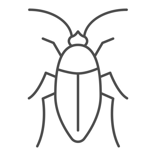 Cockroach thin line icon, pests concept, beetle sign on white background, roach icon in outline style for mobile concept and web design. Vector graphics. Cockroach thin line icon, pests concept, beetle sign on white background, roach icon in outline style for mobile concept and web design. Vector graphics macrophotography stock illustrations