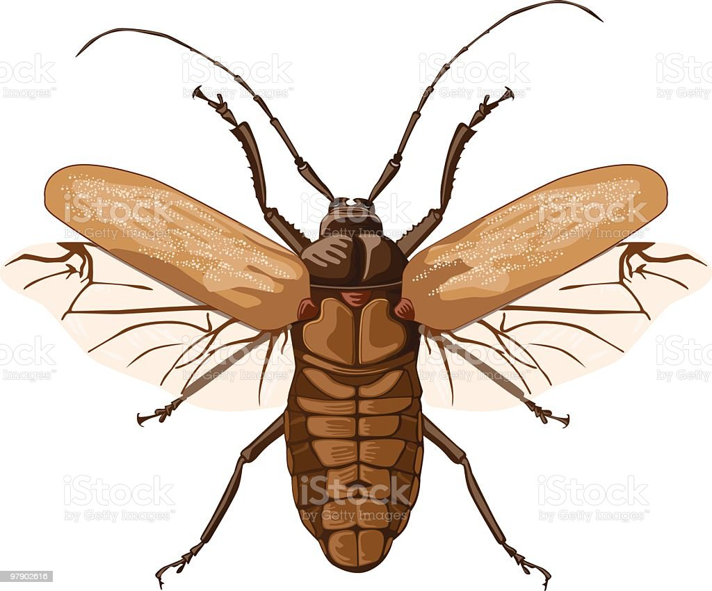 Cockroach royalty-free cockroach stock vector art & more images of animal