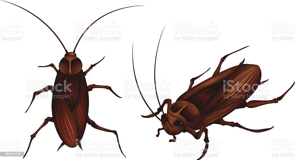 cockroaches royalty-free stock vector art