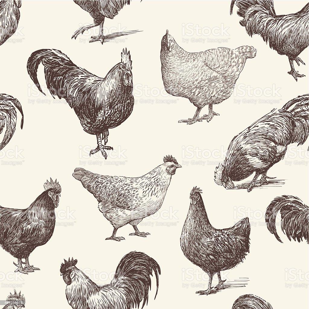 cocks and hens vector art illustration