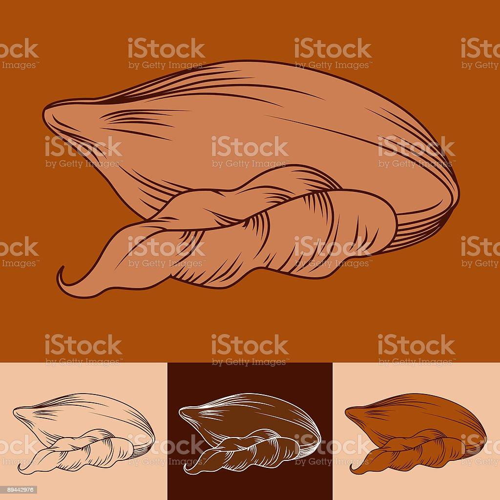 Fève de cacao fève de cacao – cliparts vectoriels et plus d'images de carré - composition libre de droits
