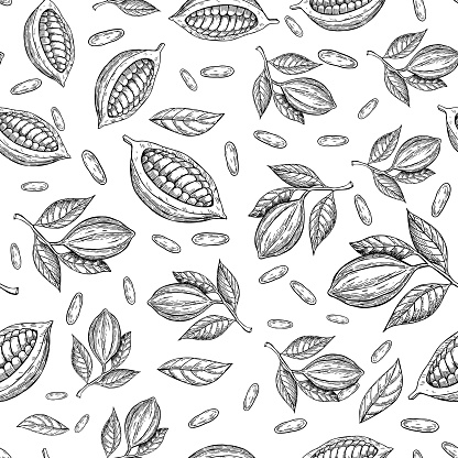 Cocoa branch vector seamless pattern. Superfood drawing. Isolated hand drawn background on white background.