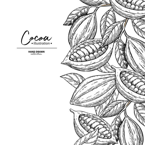 cocoa frame. vector superfood drawing template.  fruit, leaf and bean engraving. - plant pod stock illustrations