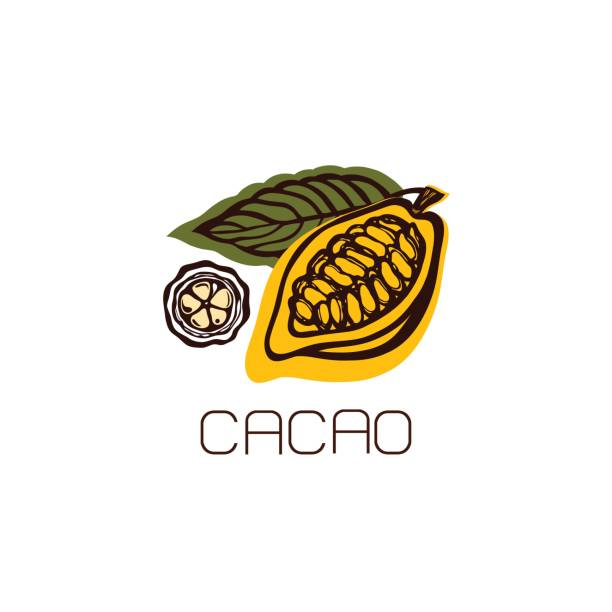 cocoa fruit with leaves. label, emblem, logo. - plant pod stock illustrations