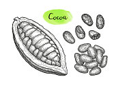 Cocoa pod and beans.