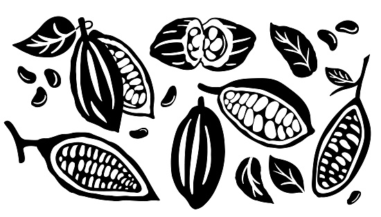 Cocoa pod and many raw beans set isolated on white background. Vector illustration.