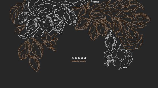 Cocoa tree, bean, plantation. Ecuador chocolate