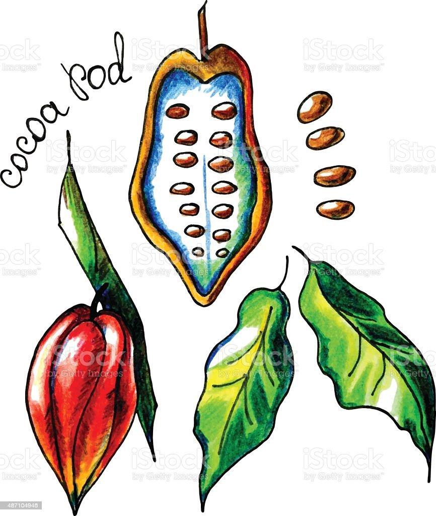 cocoapod – Vektorgrafik