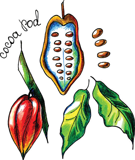 cocoapod - paleo diet stock illustrations, clip art, cartoons, & icons