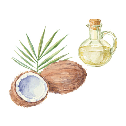Coconut and a bottle of  oil drawing by watercolor.
