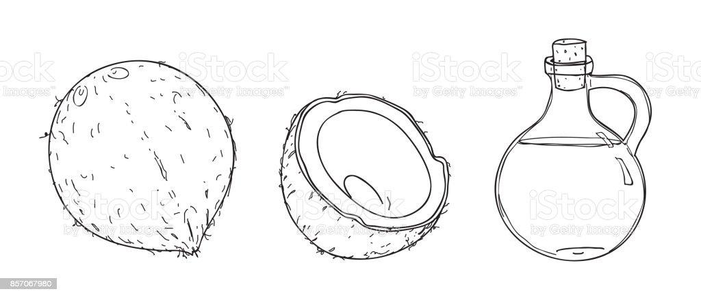 vector dibujado línea arte ilustración de la mano de coco y aceite de coco - ilustración de arte vectorial