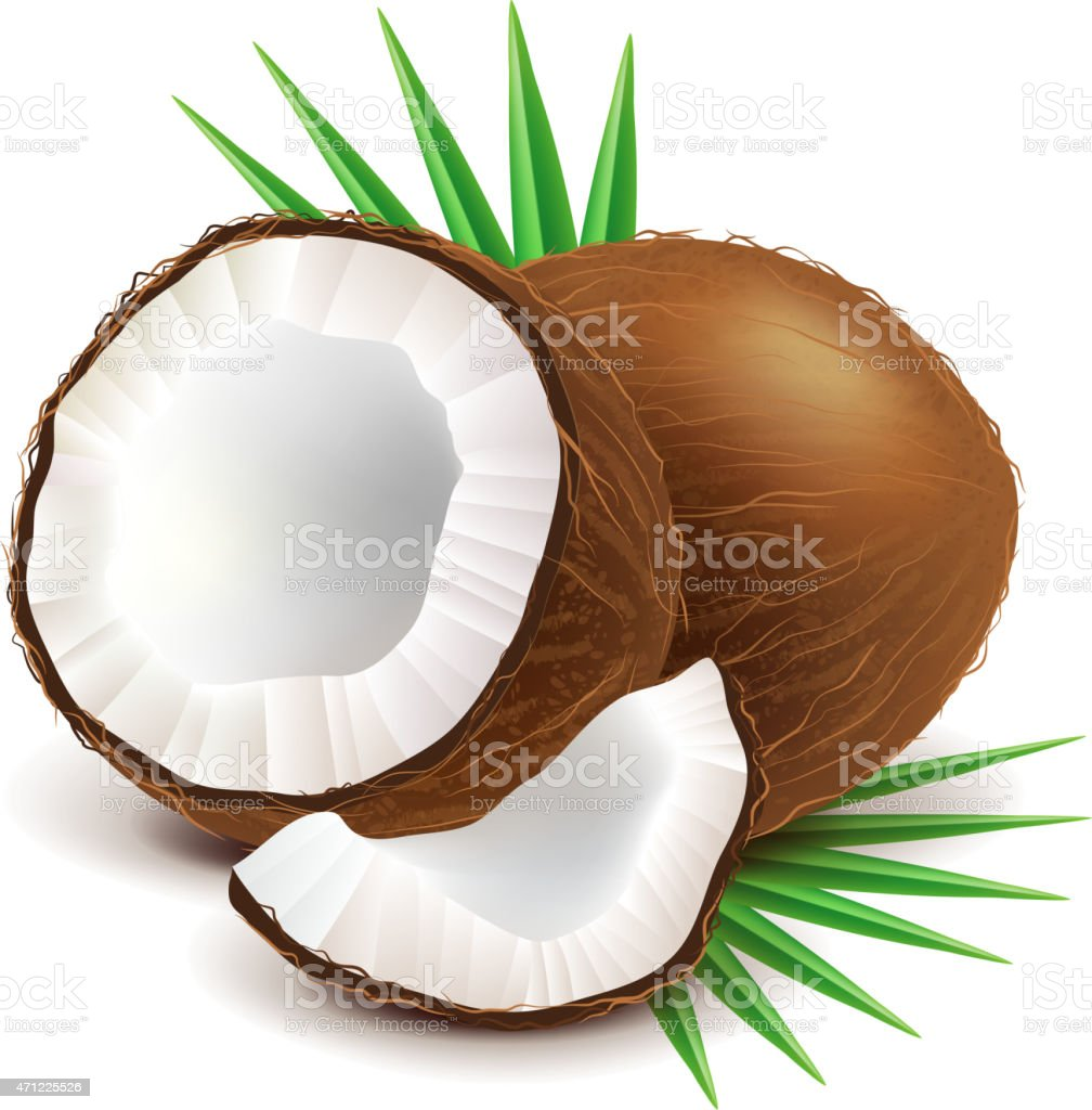 Coconut and slice isolated on white vector vector art illustration