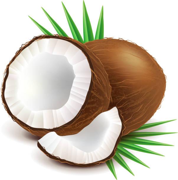 ilustrações, clipart, desenhos animados e ícones de coco e pedaço isolado no branco, vetor - coqueiro