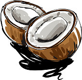 drawing of  Coconut, Elements are grouped.contains eps10 and high resolution jpeg.