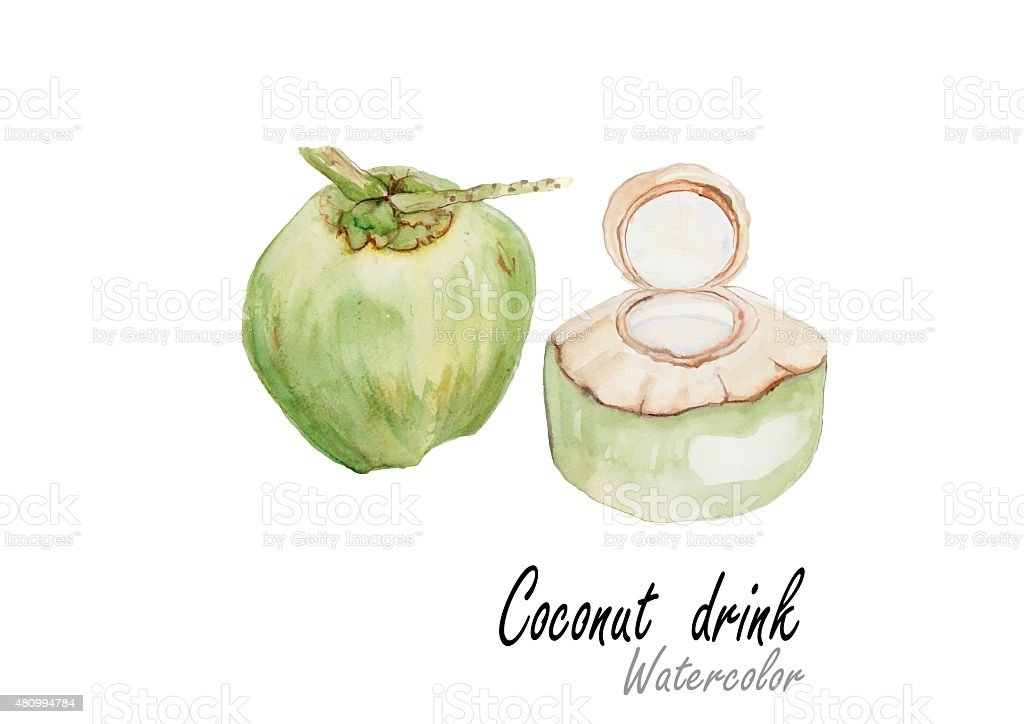 Coconut Drink Drawing 50010