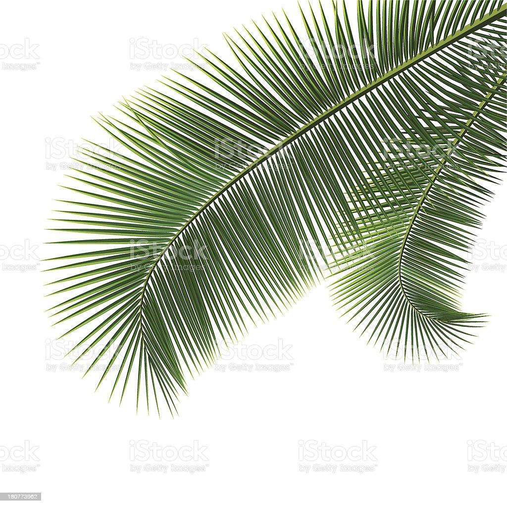 Coconut Green palm tree vector art illustration