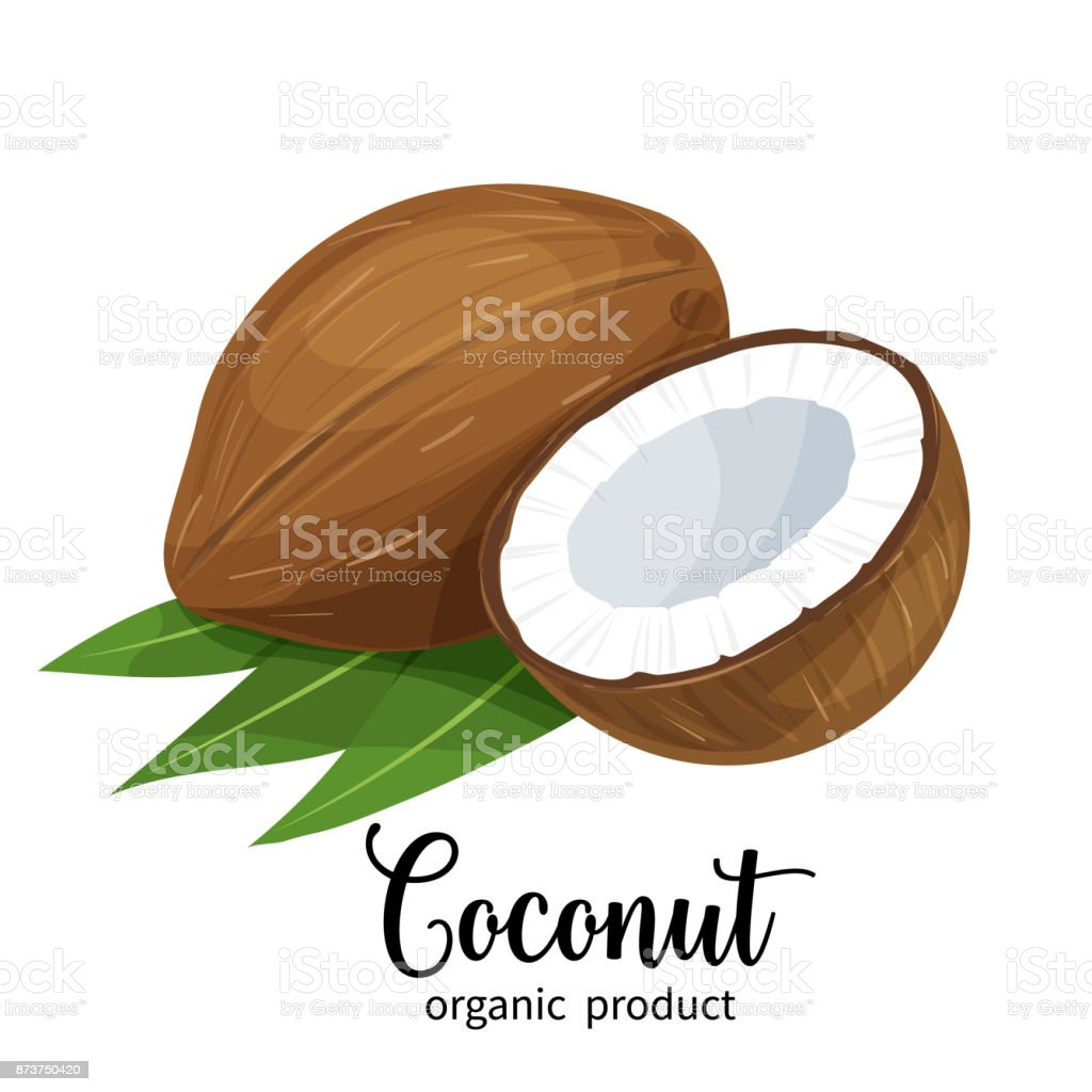 coconut in cartoon style royalty-free coconut in cartoon style stock illustration - download image now