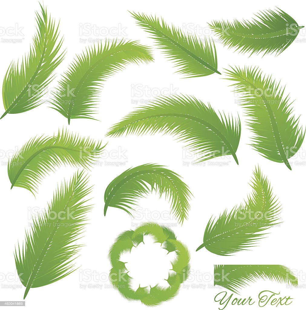 Coconut Leaf vector art illustration