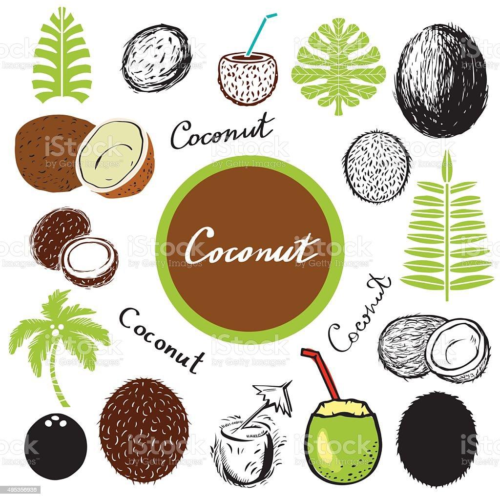 Coconut, leaves, palm tree vector art illustration