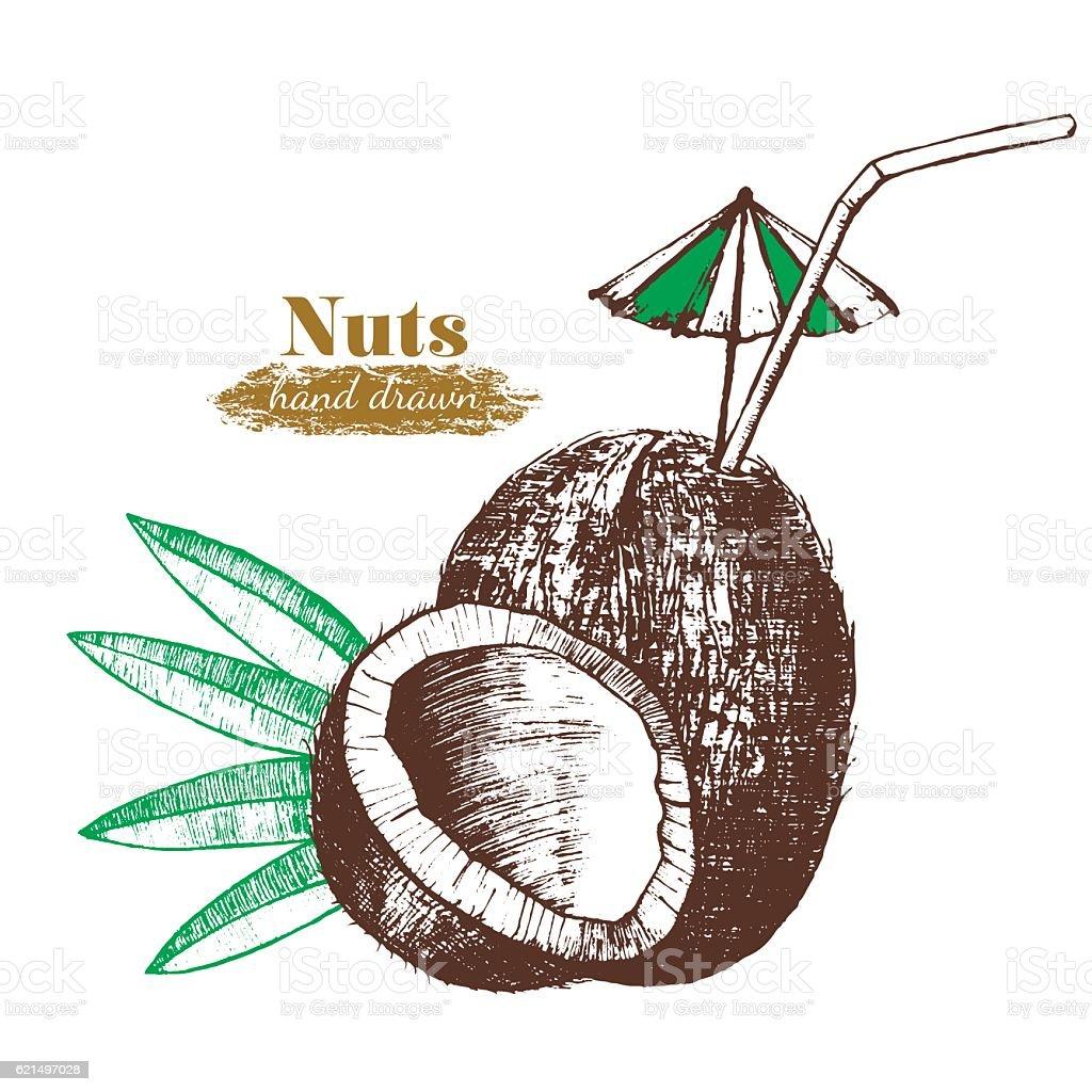 Coconut Nut Cocktail with Leaf Hand Draw Sketch. Vector coconut nut cocktail with leaf hand draw sketch vector – cliparts vectoriels et plus d'images de aliment libre de droits