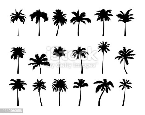 Vector coconut palm tree silhouette set. Vector illustration isolated on white background. Jungle, nature, holiday, summer theme.