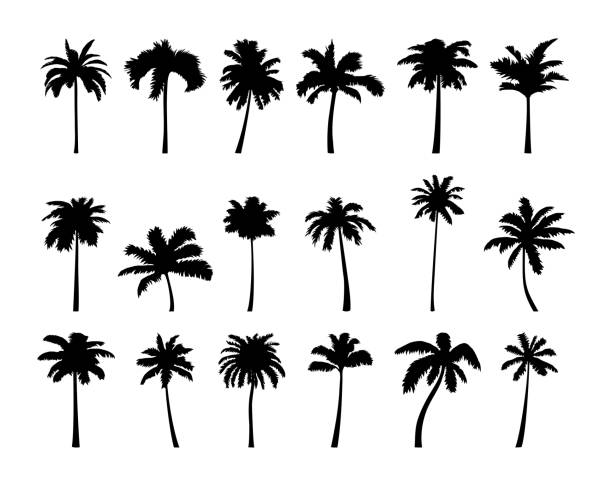 Coconut palm tree silhouette icon set. Vector coconut palm tree silhouette set. Vector illustration isolated on white background. Jungle, nature, holiday, summer theme. beach clipart stock illustrations
