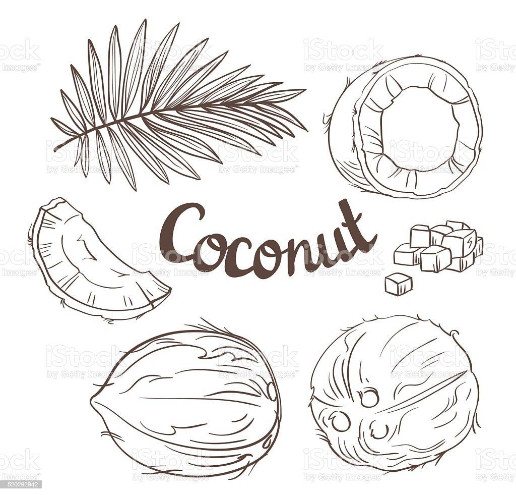 Ensemble de noix de coco lensemble de noix coco segment et - Dessin noix de coco ...