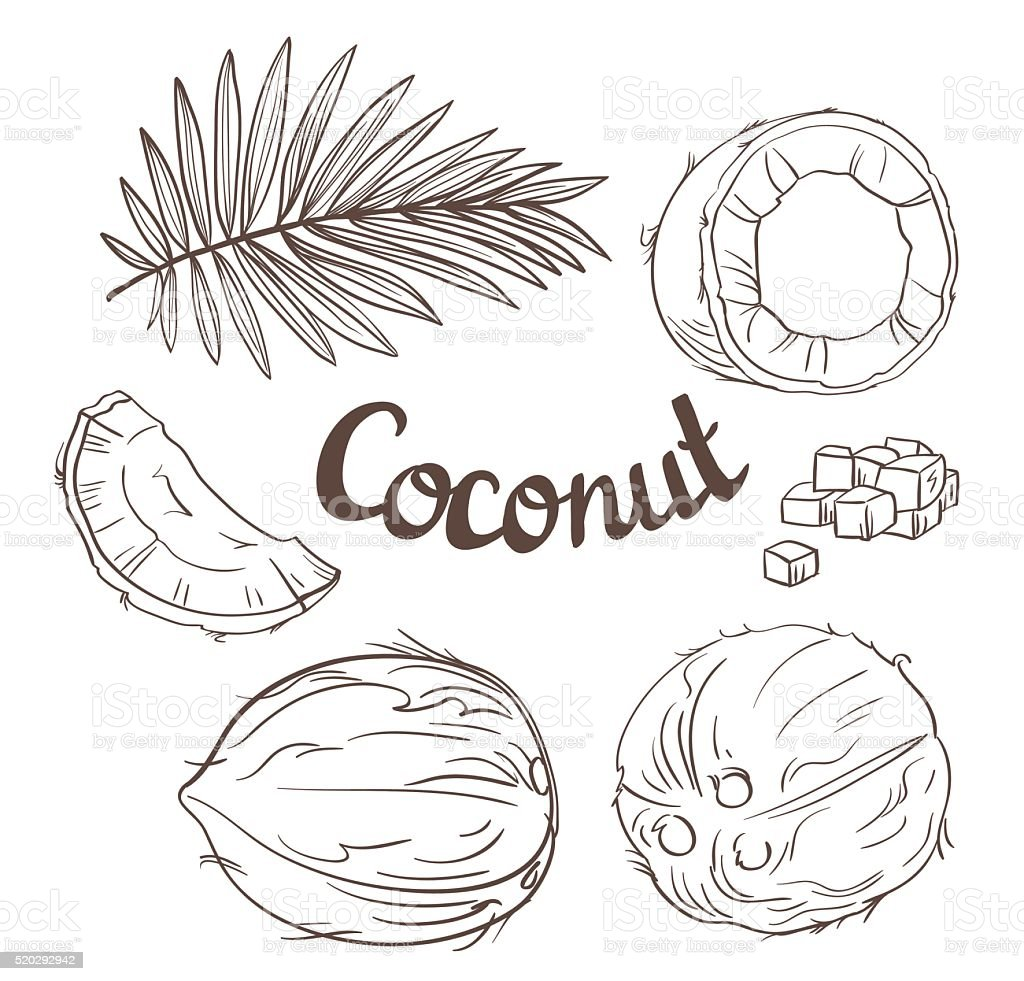 Coconut set - the whole nut, coco segment and pulp. vector art illustration