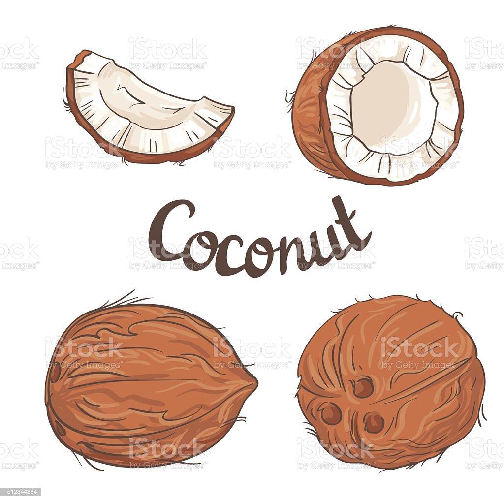 Coconut set - the whole nut. vector art illustration