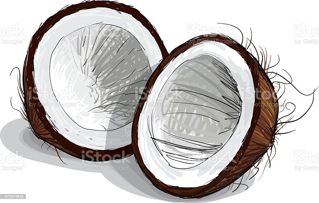 Coconut Sketch vector art illustration