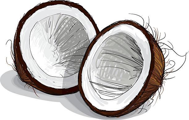 ilustrações, clipart, desenhos animados e ícones de desenho de coco - coqueiro