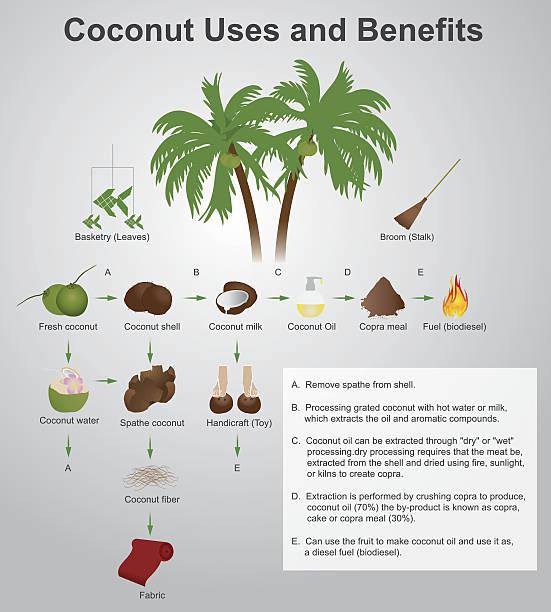 coconut uses and benefits - ilustración de arte vectorial