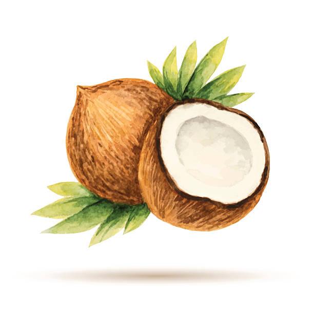 ilustrações, clipart, desenhos animados e ícones de coco - coqueiro