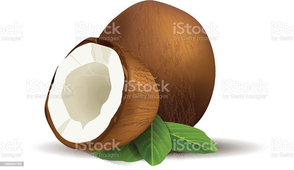 royalty free coconut clip art vector images illustrations istock rh istockphoto com coconut clipart jpg coconut tree clipart png