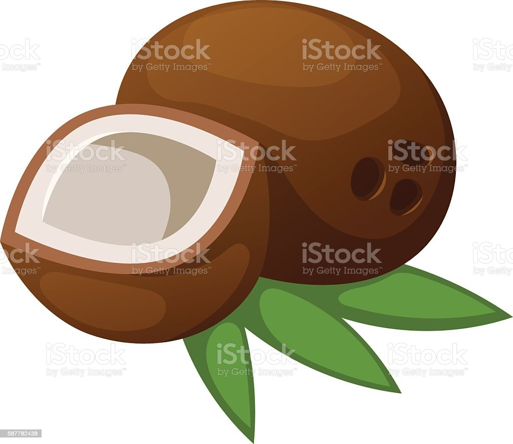 Coconut vector illustration isolated vector art illustration