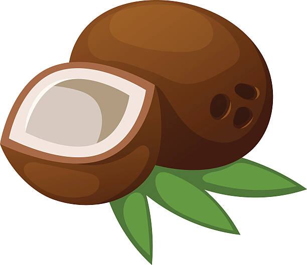 ilustrações de stock, clip art, desenhos animados e ícones de coconut vector illustration isolated - oleo palma