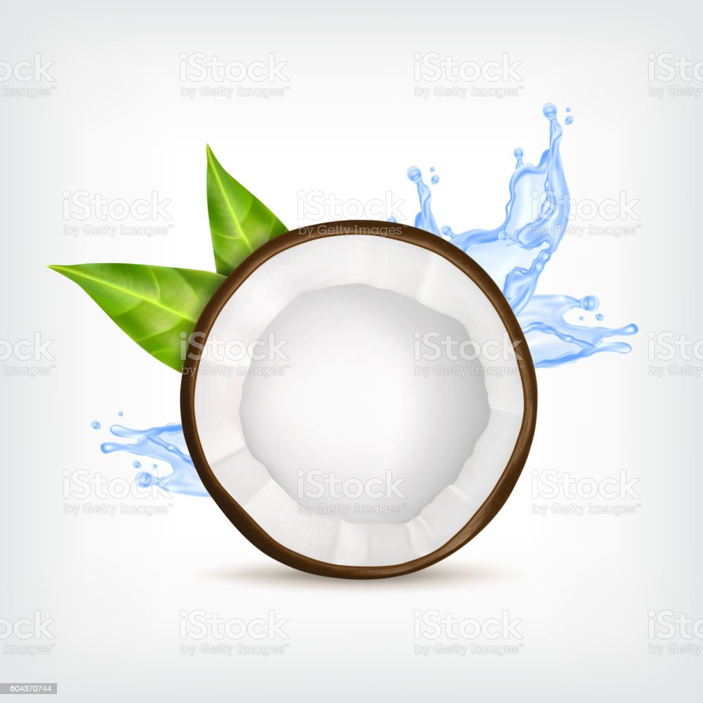 Coconut with green leaves vector art illustration