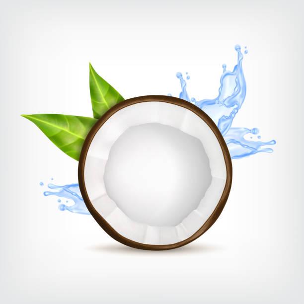 ilustrações, clipart, desenhos animados e ícones de coco com folhas verdes - coqueiro