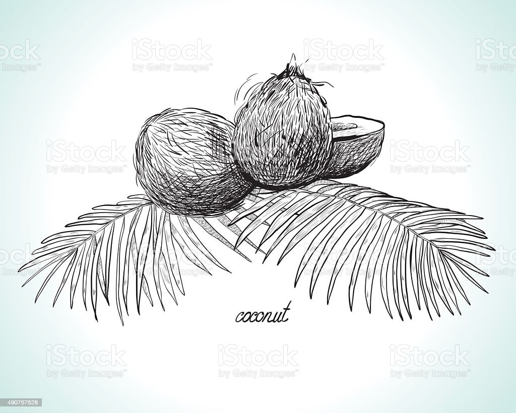 Coconuts and coconut palm leaves, monochrome, Line Art vector art illustration