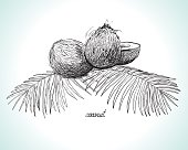 Coconuts and coconut palm leaves, monochrome, Line Art