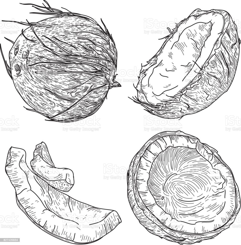 Coconuts in Black and White Set vector art illustration