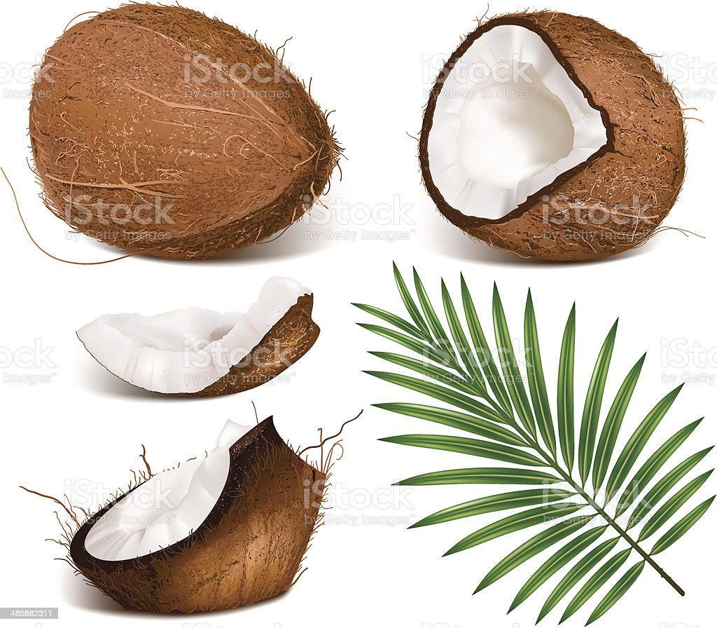 Coconuts with leaves. vector art illustration