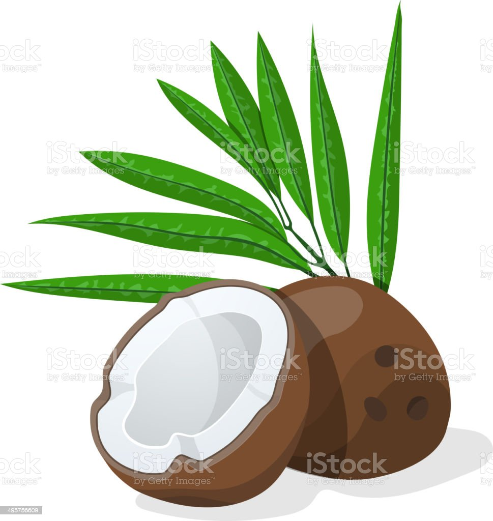 Coconuts with leaves. Vector illustration. vector art illustration