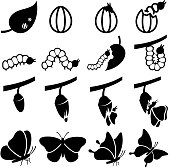 Cocoon to Butterfly Transformation black and white icon set