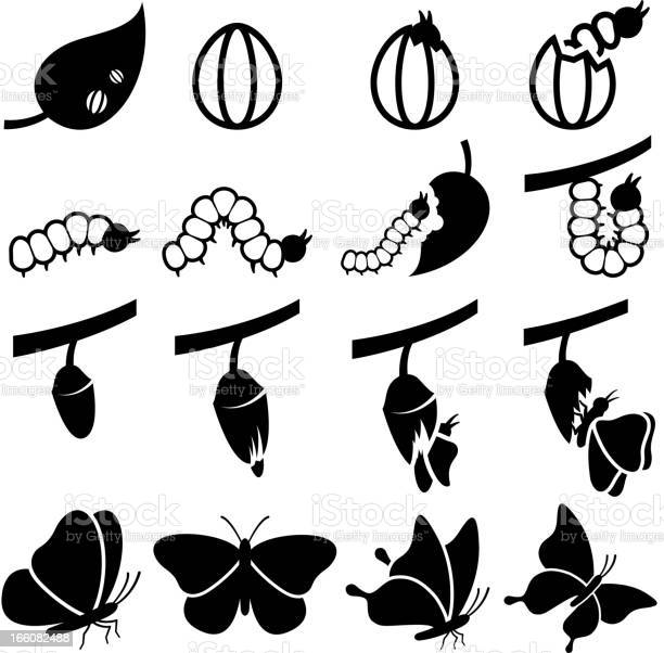 Cocoon to butterfly life transformation process vector icon set vector id166082488?b=1&k=6&m=166082488&s=612x612&h=apom7amw00odhzwug76ack ey2hv3vm9nunbt3lfes0=