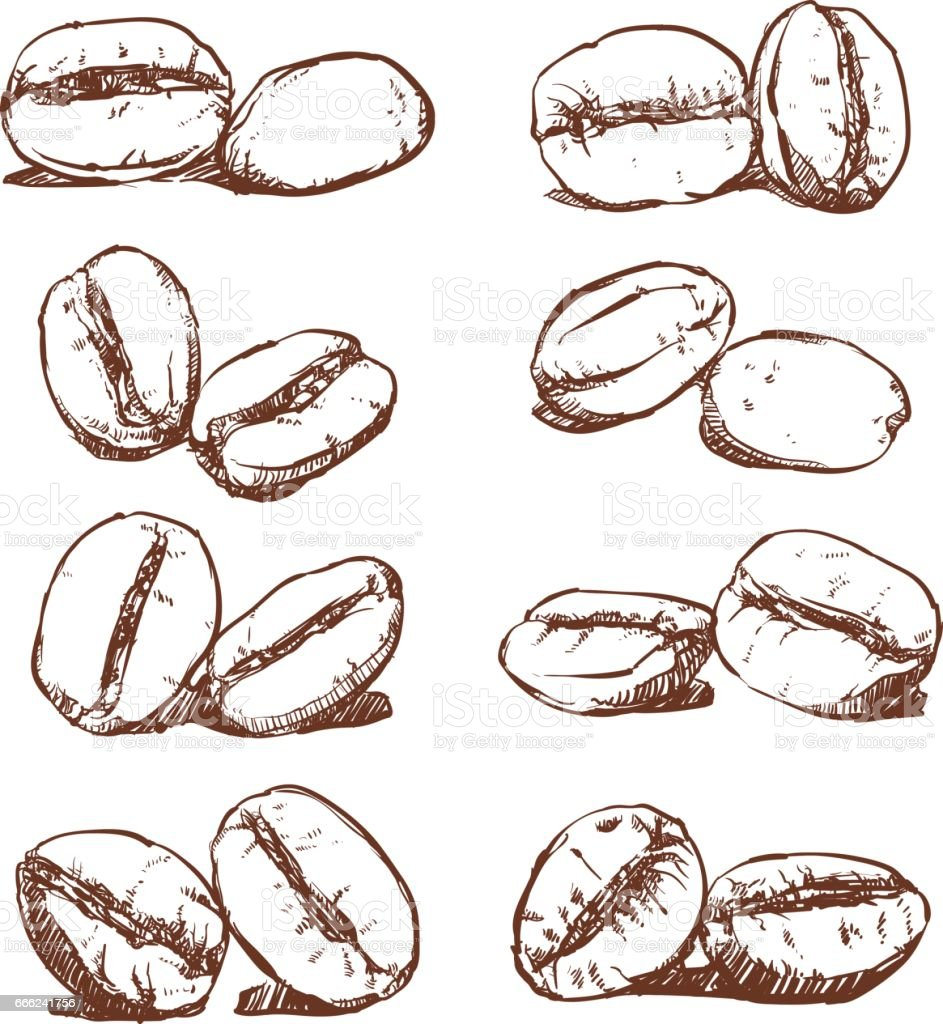 Coffee bean hand drawn vector sketch of coffee beans stock for How to draw a coffee bean