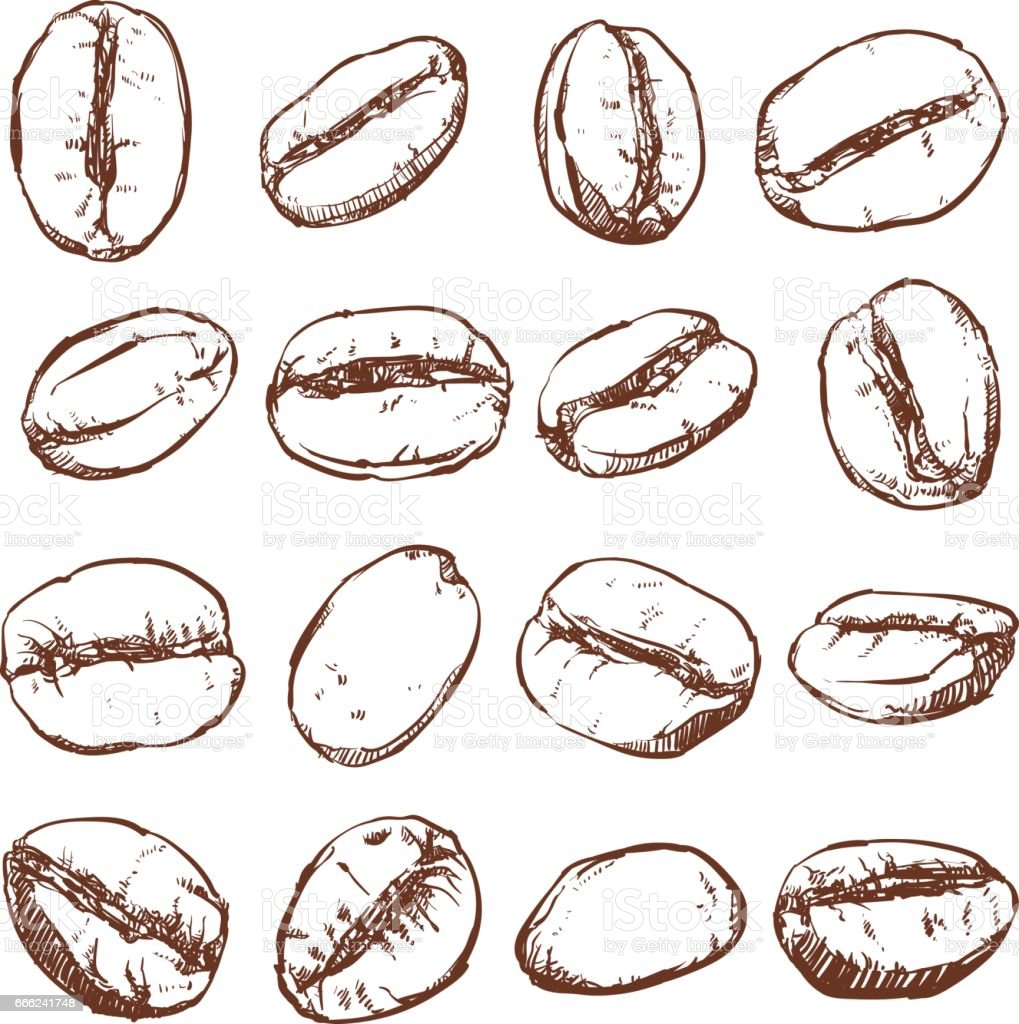 coffee bean isolated hand drawn vector sketch of coffee beans stock rh istockphoto com coffee bean factory Coffee Poster